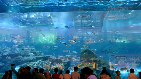 shark : DUBAI, UNITED ARAB EMIRATES, UAE - NOVEMBER 20, 2017: Aquarium in Dubai Mall - worlds largest shopping mall. People enjoying the beautiful view.