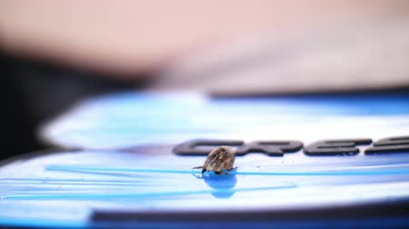 hermit crab : close-up, a small hermit crab crawls on one of the fins Stock Footage