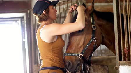 longhair : Young girl grooming horse and making braids from mane. in a stable the girl takes care of the brown horse