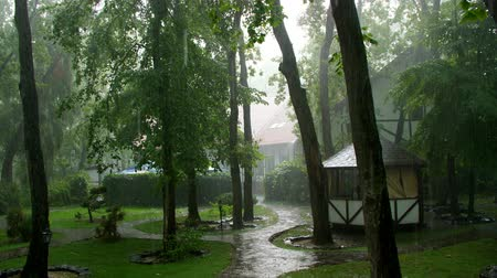magnífico : summer rain, a thunderstorm, a heavy downpour at the recreation center, in a pine forest, park. water flows down in large drops Vídeos