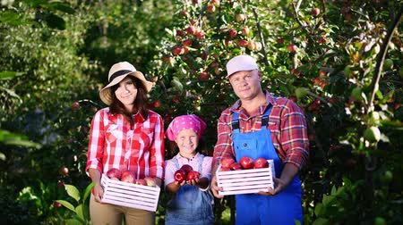 zahradník : picking apples on farm, in garden. on hot, sunny autumn day. portrait of family of farmers, holding in their hands wooden boxes with red ripe organic apples, smiling,