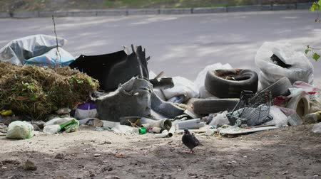 litter box : on ground, on side of road, lots of garbage is lying. scattered trash, rubbish, old things, car tires, broken glass, plastic. garbage dump. ecology, pollution of the environment.