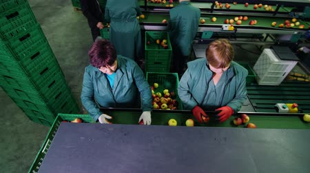 crate : in an apple processing factory, workers in gloves sort apples. Ripe apples sorting by size and color, then packing. industrial production facilities in food industry. view from above Stock Footage
