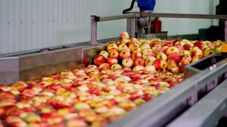 banheira : fresh picked apple harvest. The process of washing apples in a fruit production plant, Special bath, packing tub at fruit warehouse. Sorting apples at the factory. food industry