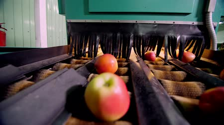 промывали : Equipment in a factory for drying and sorting apples. industrial production facilities in food industry