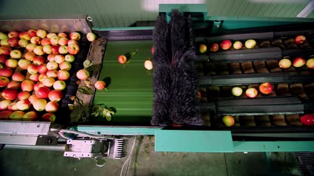 промывали : Equipment in a factory for washing, drying and sorting apples. industrial production facilities in food industry