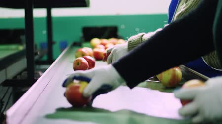 строк : in an apple processing factory, workers in gloves sort apples. Ripe apples sorting by size and color, then packing. industrial production facilities in food industry