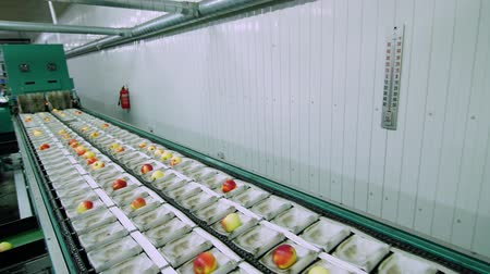 hozam : Equipment in a factory for drying and sorting apples. industrial production facilities in food industry