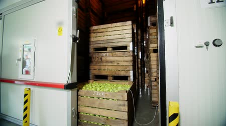 preservação : Fresh harvested Apples in a Storage Compartment, a special storage room in warehouse. tightly spaced many large wooden boxes full of green apples. apple storage technology