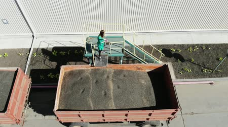 pozíció : woman, employee of agricultural enterprise, takes samples of grain and sunflower seeds from tube for analysis in lab. truck carries sunflower seeds, to warehouse for further processing. Stock mozgókép