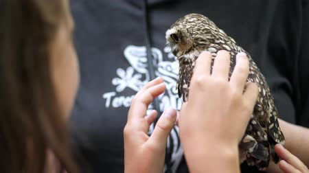 levrek : domestic owl. girl strokes a small motley owl. close-up. in the forest, park for a walk, summer day.
