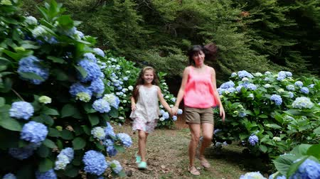 ortanca : Many blooming hydrangea bushes grow in the park. The girl, kid, and woman, happily run past the blue beautiful flowers of hydrangea.