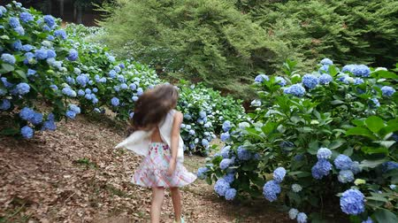 hortênsia : Many blooming hydrangea bushes grow in the park. The girl, the kid, happily runs past the blue beautiful flowers of hydrangea.