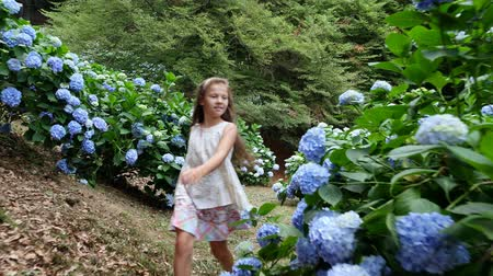 ortanca : Many blooming hydrangea bushes grow in the park. The girl, the kid, happily runs past the blue beautiful flowers of hydrangea.
