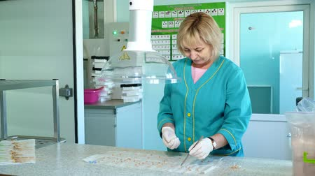 propagação : lab worker studying, examines Seeds and shoots of genetically modified cereals, corn seeds, in laboratory. Science laboratory research, biotechnology, GMO concept. germination of seeds of various grains, crops Vídeos