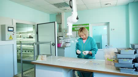 výstřižek : lab worker studying, examines sprouted, rooted corn seeds, in laboratory. Science laboratory research, biotechnology, GMO concept. germination of seeds of various grains, crops