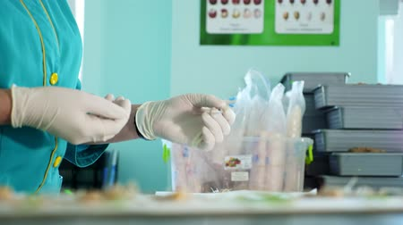 propagação : close up, gloved hands of lab worker studying, examine sprouted, rooted corn seeds, in laboratory. Science laboratory research, biotechnology, GMO concept. germination of seeds