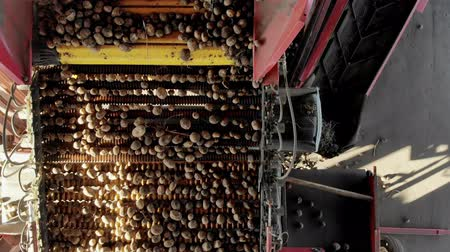 amido : top view. special mechanized process of Potato sorting at farm. potatoes are unloaded on conveyor belt, and workers are sorting potatoes manually. potatoes are put in wooden boxes for packaging.
