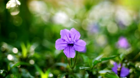 mallow : close-up beautiful purple flower on the background of lush greenery Stock Footage