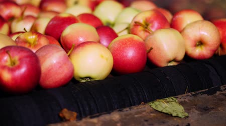 warehouses : Equipment in a factory for washing, drying and sorting apples. industrial production facilities in food industry. fresh picked apple harvest. Stock Footage