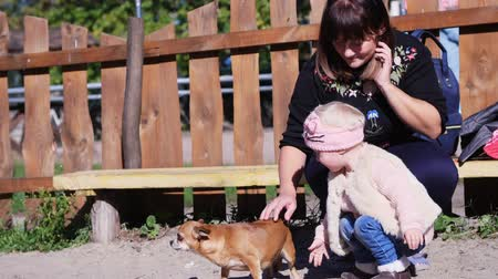 av köpeği : CHERKASY, UKRAINE, OCTOBER 17, 2018: Mom and her cute little daughter, a two-year-old girl, are watching and petting a little red dog in an autumn park. warm autumn sunny day. Stok Video