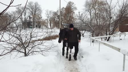 positive vibes : winter, there is a young disabled man on the way. he has a prosthesis instead of his right leg. he leads a black thoroughbred horse. concept of rehabilitation of the disabled with animals. equestrian sports. Stock Footage