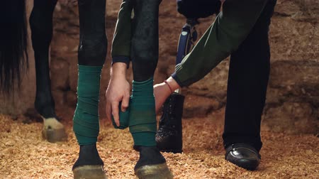 horse racing : close-up, a man bandaging horses leg. Horse legs are protected with bandages Stock Footage