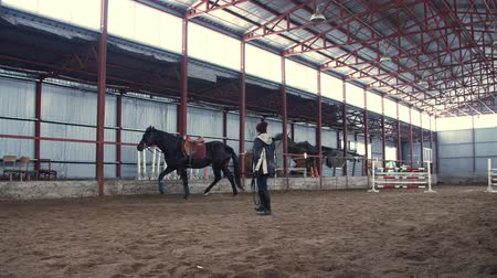 арена : In a special hangar, a woman coach trains a black, thoroughbred horse. he jumps, runs in a circle, around. horse training Стоковые видеозаписи