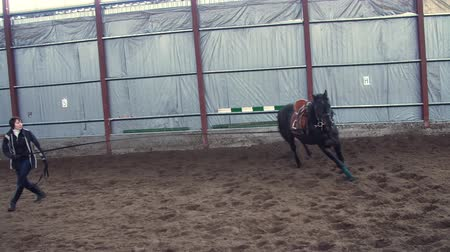 lóháton : In a special hangar, a woman coach trains a black, thoroughbred horse. he jumps, runs in a circle, around. horse training Stock mozgókép