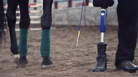 prosthesis : close-up, horse legs, rewound with bandage and male legs of a disabled rider. man has a prosthesis instead of his right leg. concept of sincere friendship of man and animal. Hippotherapy. Stock Footage