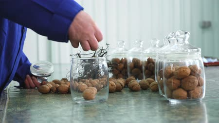 przeszczep : close-up, worker s hands put walnuts in glass jars. different kinds, grown selectively, hybrids of walnuts of better quality. walnuts for the food industry. fodder walnut for thoroughbred horses. Wideo