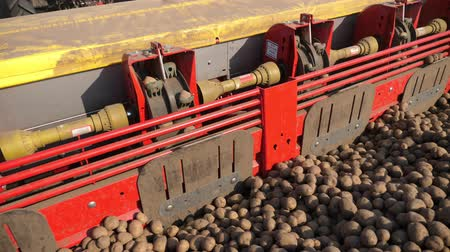 sow : close-up, process of mechanized machine potatoe planting. large tractor with special equipment and potato Seeds, rides through plowed black soil field, plants potatoes, forms even rows, spring day, planting season. Stock Footage