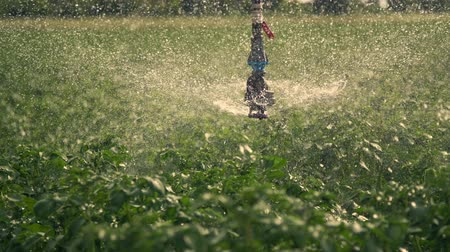 뿌리다 : close-up, special irrigation system sprinkles water over green potato bushes. Rainfall water drops, spray fly over green foliage. growing and watering potatoes on farm fields