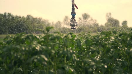 irrigation system : close-up, special irrigation system sprinkles water over green potato bushes. Rainfall water drops, spray fly over green foliage. growing and watering potatoes on farm fields