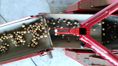 szállító : Harvesting potatoes. top view. potato tubers move on a special machine tape , automated potato cleaning from dirt and soil , sifted from debris. potato growing, agriculture.