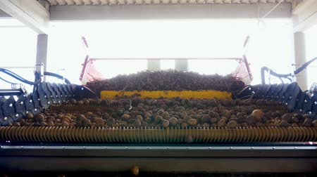 でんぷん : Harvesting potatoes. close-up. potato tubers move on a special machine tape , automated potato cleaning from dirt and soil , sifted from debris. potato growing, agriculture.