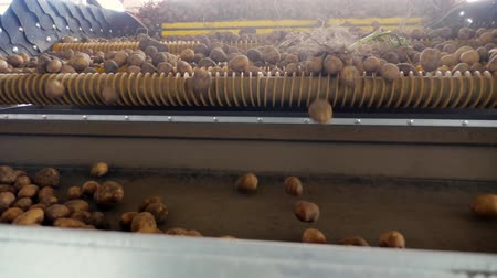 уборка : Harvesting potatoes. close-up. potato tubers move on a special machine tape , automated potato cleaning from dirt and soil , sifted from debris. potato growing, agriculture.