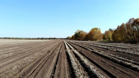 príncipe : Warm autumn day at the farm field. potato crop. plowed land, soil, after harvesting potatoes