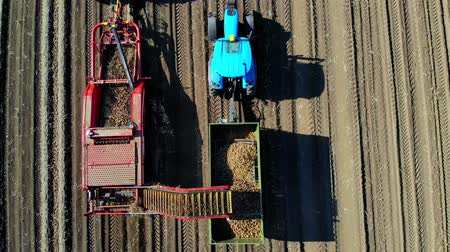 Top view, aero. Useing machinery at farm field during potatoe harvesting . Potatoe picking machine digs and picks potatoes, unloading crop into back of truck. warm autumn day
