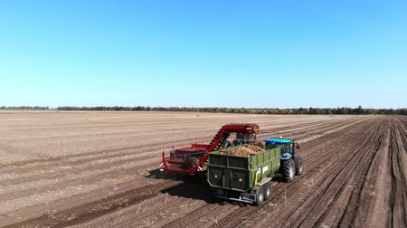 baixo ângulo : Top view, aero. Useing machinery at farm field during potatoe harvesting . Potatoe picking machine digs and picks potatoes, unloading crop into back of truck. warm autumn day