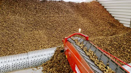 close-up, Potatoes move on special conveyor machinery belt and fit into a storage room, a warehouse for winter storage. potato harvesting, crop Vídeos