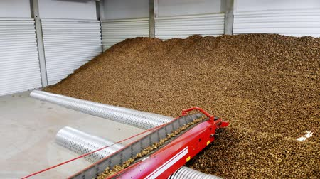 hlíza : Potatoes move on special conveyor machinery belt and fit into a storage room, a warehouse for winter storage. potato harvesting, crop