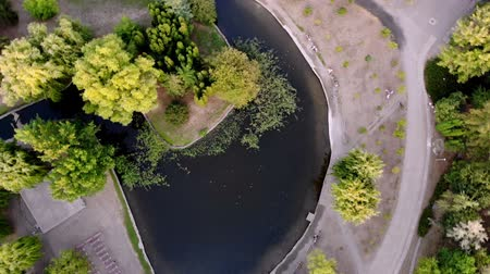 Aero, top view. green trees, walking paths and a lake in the middle of a city park in summer.