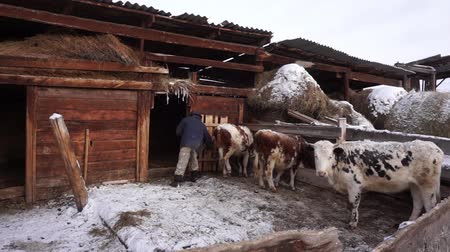 навес : A farmer works with household chores. Cattle. Village.