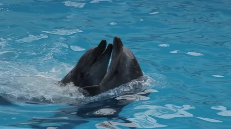 killer whale : dolphins in captivity. Beautifull show