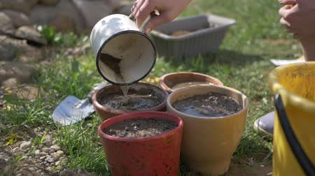 seeding : Girl watering seeds in pots