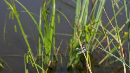 Dragonfly sits on the grass