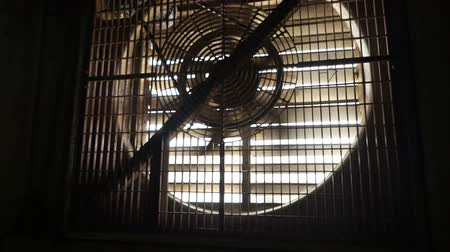 termostat : interior of a new and empty pig farm, automatic fan with thermostat