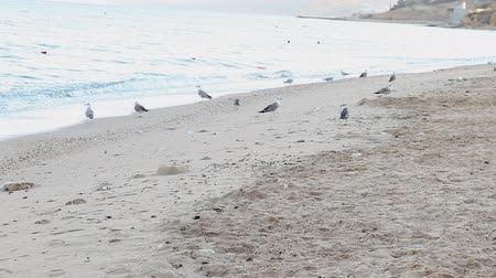 aves marinhas : dog beach sand sea gulls
