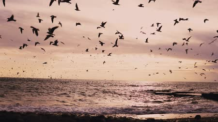 морских птиц : a flock of seabirds gulls and Ocean Beach with the wind